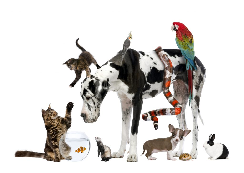 Pets, Pets Everywhere: The World's Most Popular Pets | Lone Tree Veterinary  Medical Center