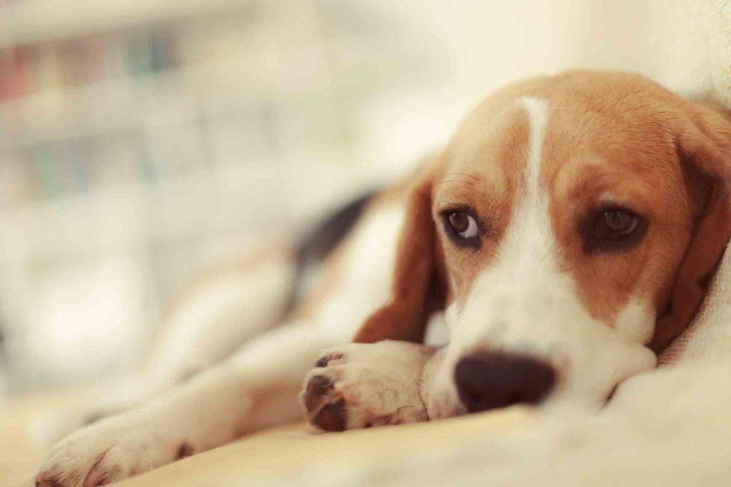 urinary tract infections in pets