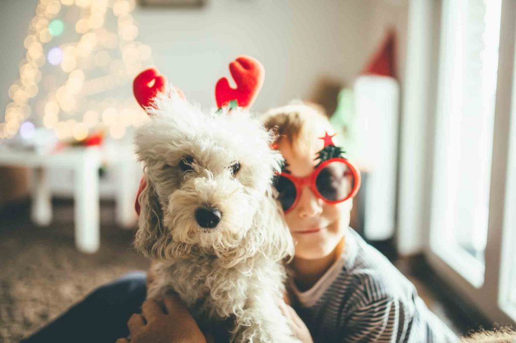 holiday pet reminders