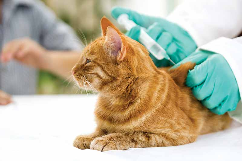 Pet vaccinations are designed to protect your pet against infectious diseases that could be fatal or greatly reduce your pet's quality of life.