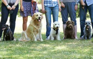 Lone Tree Veterinary Hospital's canine academy can help dog behavior