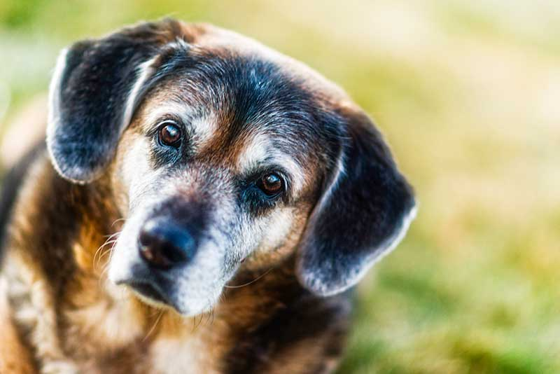Adopting a senior pet is the best pet rescue of all!
