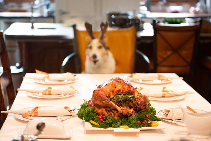 Holiday pet safety considerations should be made for holiday meals and decor