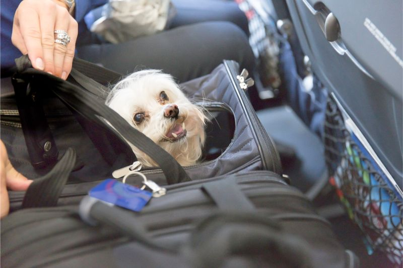 A small white dog in a soft carrier, sitting in an airplane seat