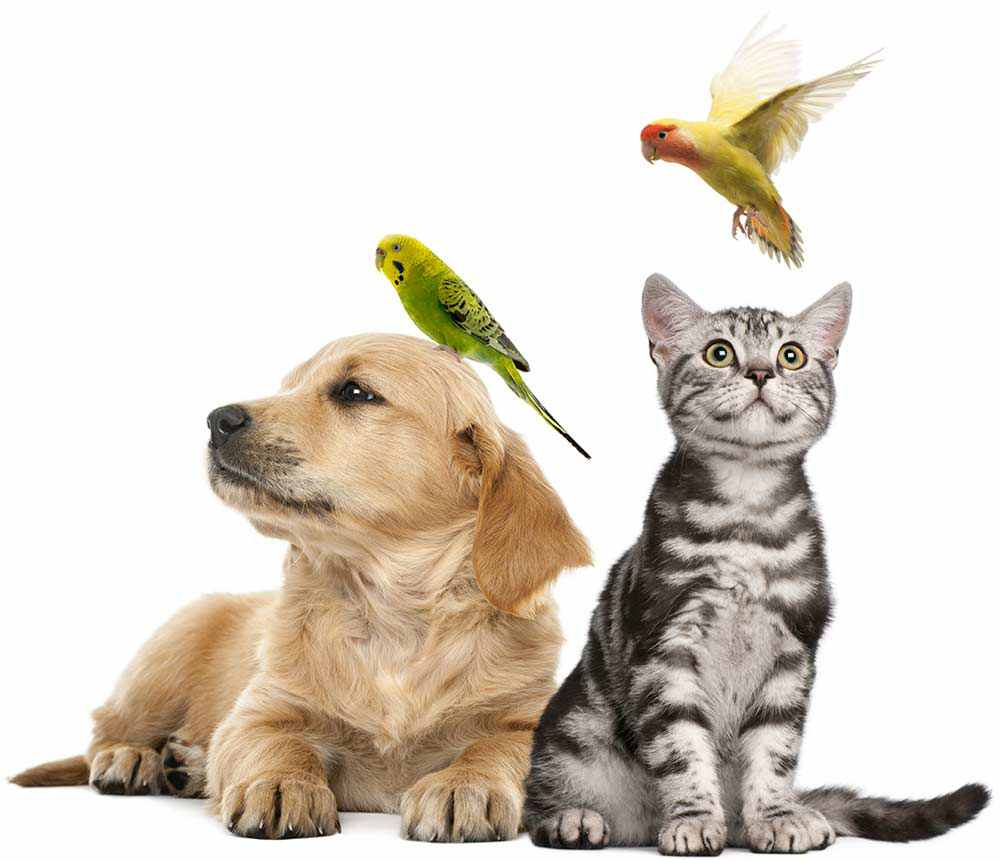 Dog, cat, and birds